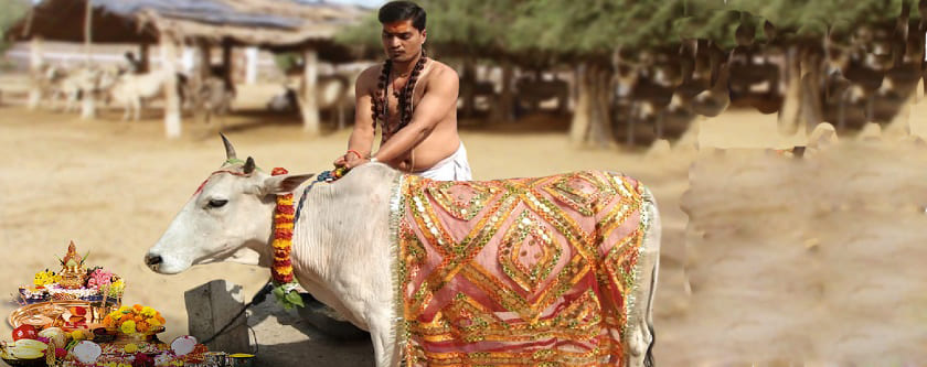 Cow Donation or Baitarni Cow Daan while doing Pind daan (Death Rituals)